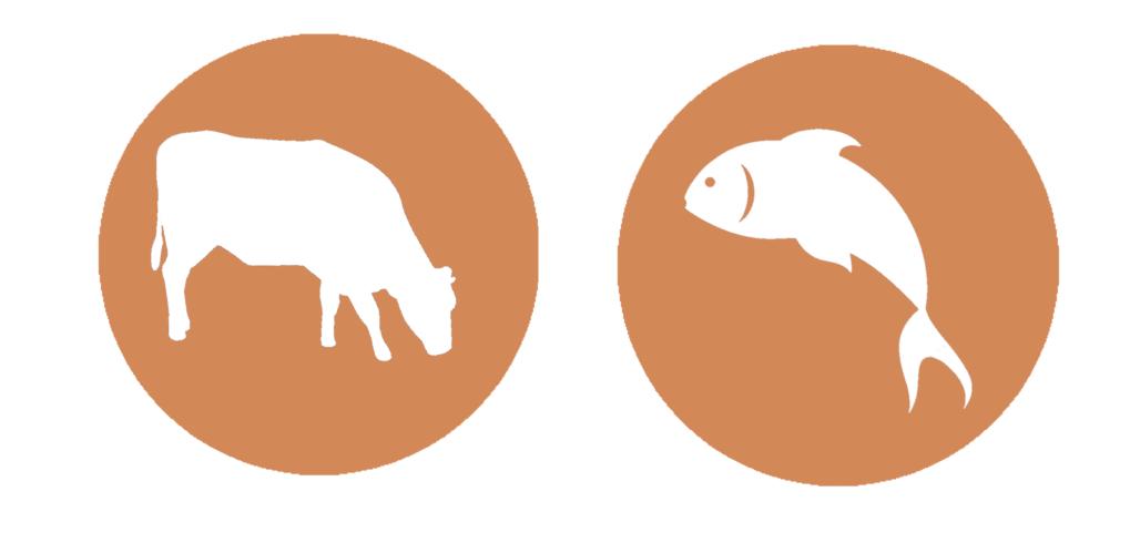 kráva-ryba-losos